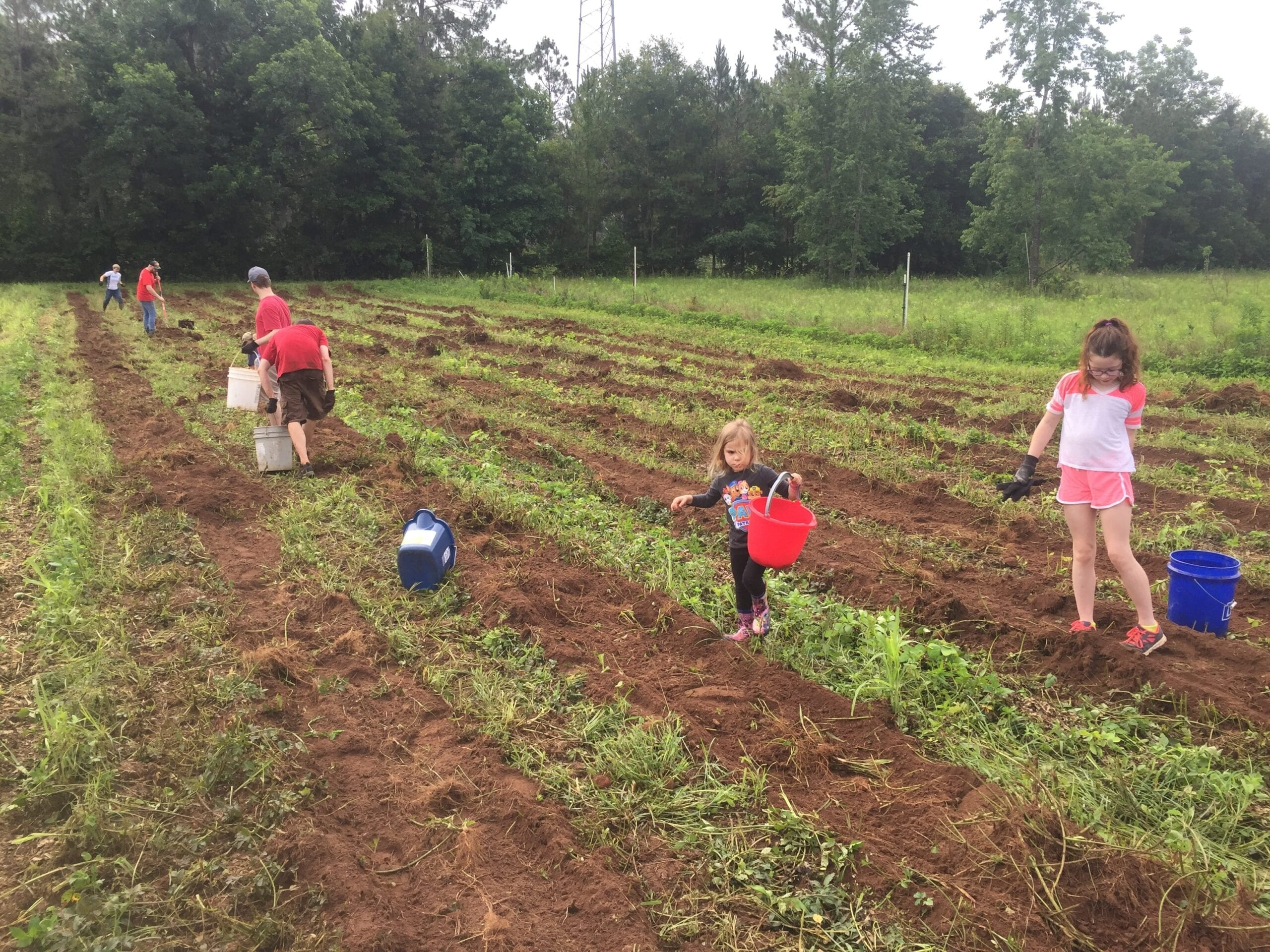 children in a farm picking vegetables